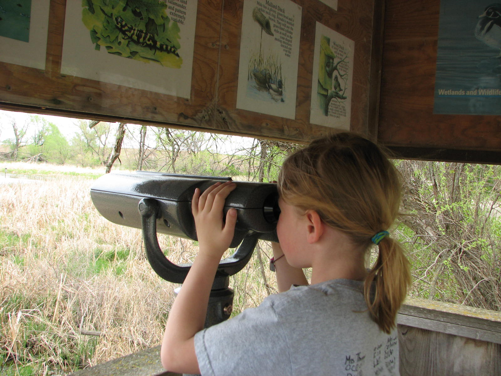 Viewing Binoculars